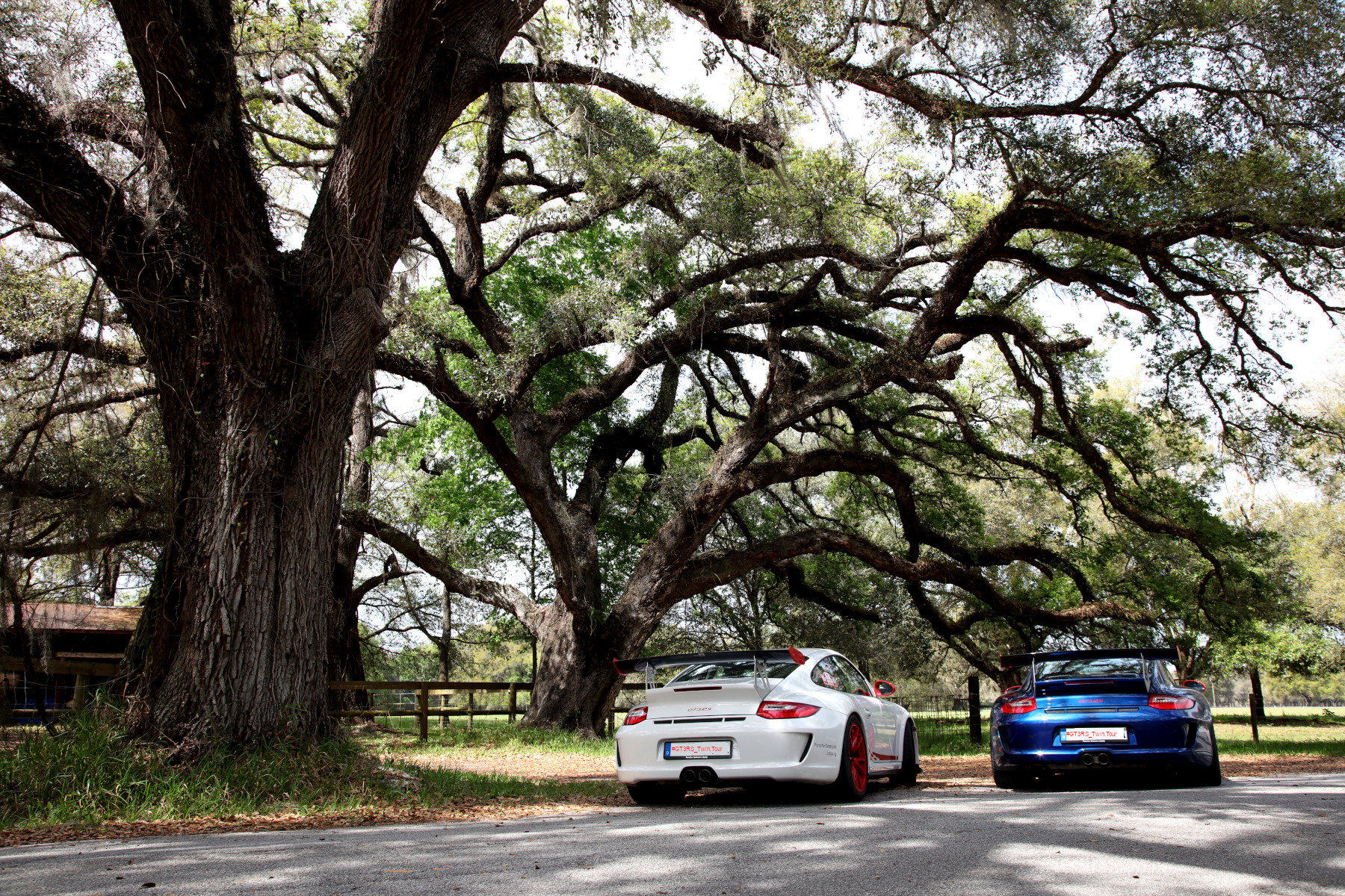 The Twins under live oaks
